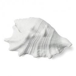 Coquillage blanc 12x8cm