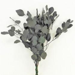 """Bouquet d'eucalyptus stabilisé """"populus"""""""