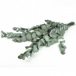 """Bouquet d'eucalyptus """"cinera"""" stabilisé"""